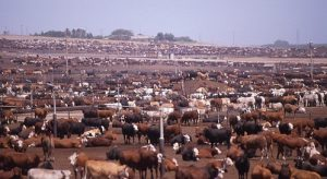 Farm and Ranch Jobs & farm labor jobs